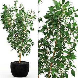 植物花盆栽3D模型-1007P15