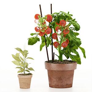 植物花盆栽3D模型-1007P20