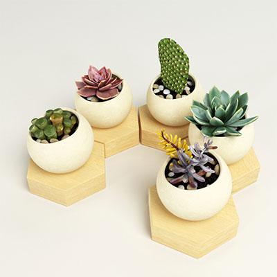 多肉植物盆栽3D模型-1007P28