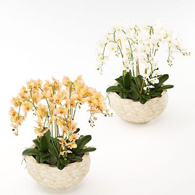 兰花绿植3D模型-1008F10