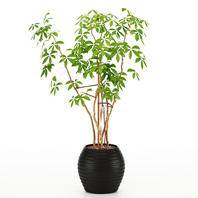 盆栽绿植3D模型-1007P25