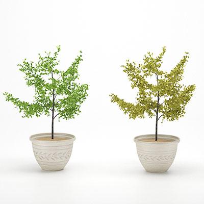 盆栽绿植3D模型-1007P24