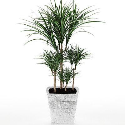 盆栽绿植3D模型-1007P22
