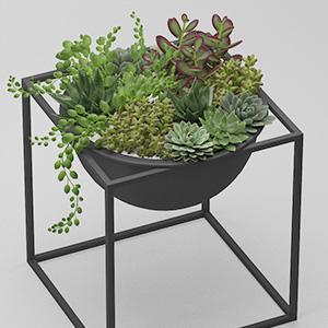 多肉植物盆栽3D模型-1007P43