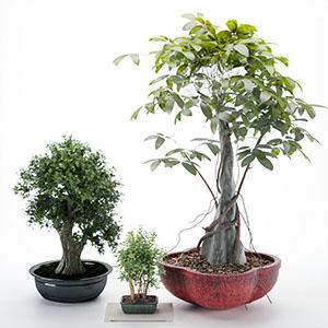 盆栽3D模型-1007P64