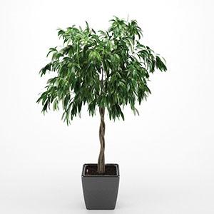 现代榕树盆栽3D模型-1007P67