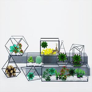 多肉植物3D模型-1006Z4