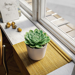 多肉植物3D模型-1007P72