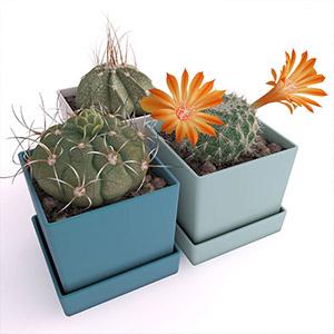 盆栽3D模型-1007P71