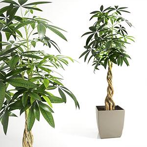 发财树盆栽3D模型-1007P80