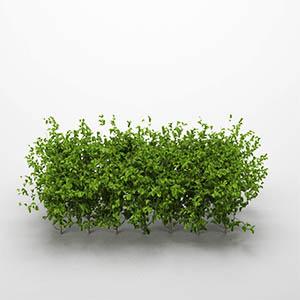 灌木3D模型-1002G27