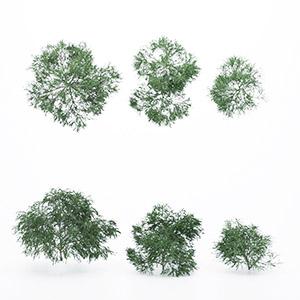 灌木3D模型-1002G29