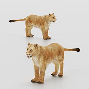 雌性狮子3D模型-0902P2