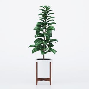 植物盆栽3D模型-1007P83