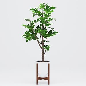 植物盆栽3D模型-1007P84