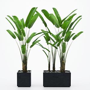 植物盆栽3D模型-1007P85