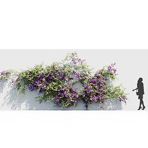 爬藤植物3D模型-1003T10