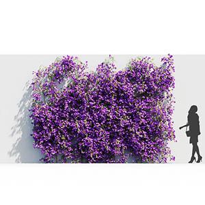 爬藤植物3D模型-1003T11