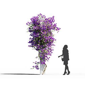 爬藤植物3D模型-1003T13