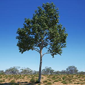 树3D模型-100101S17