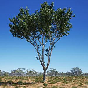 树3D模型-100101S18
