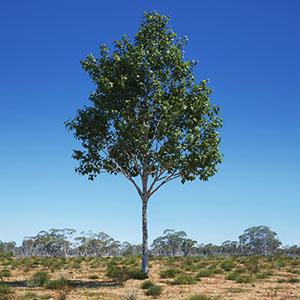 树3D模型-100101S19