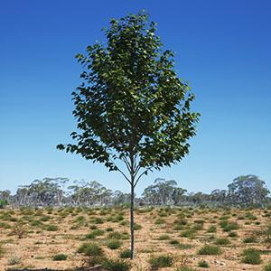 树3D模型-100101S20