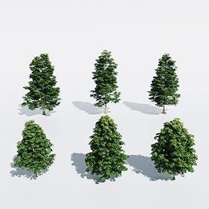 树3D模型-100101S50