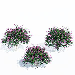 花树3D模型-100102S43