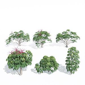 花树3D模型-100102S46