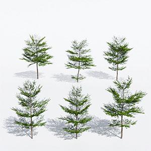 树3D模型-100101S52