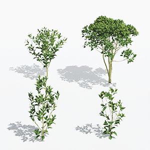 花草灌木3D模型-1009H70