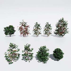 花草灌木3D模型-1009H73