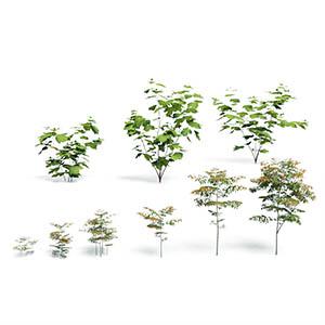 花草灌木3D模型-1002G36