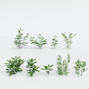 灌木3D模型-1002G39