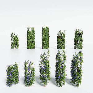 爬藤植物3D模型-1003T17