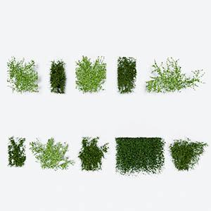 爬藤植物3D模型-1003T18