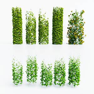 爬藤植物3D模型-1003T21