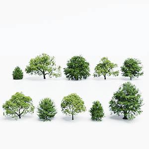 树3D模型-100101S55
