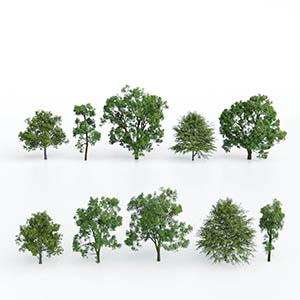 树3D模型-100101S56