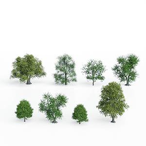 树3D模型-100101S57