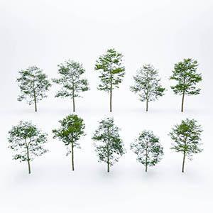 树3D模型-100101S58