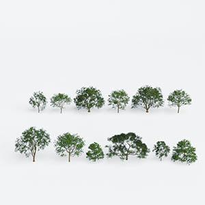 树3D模型-100101S61