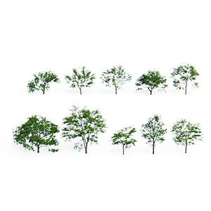 树3D模型-100101S63