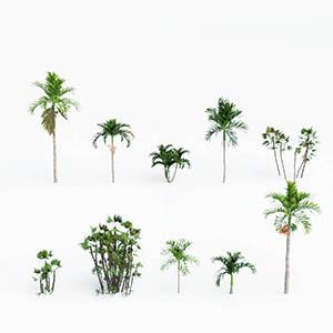 热带树3D模型-100101S65