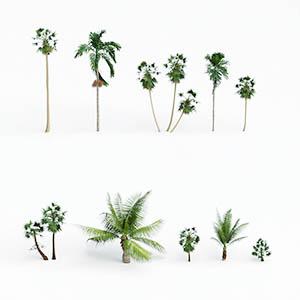 热带树3D模型-100101S66