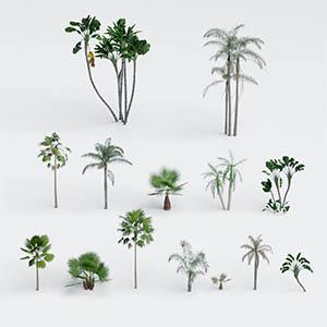 热带树3D模型-100101S69