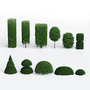 灌木3D模型-1002G43