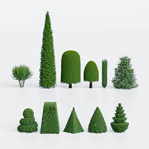 灌木3D模型-1002G48