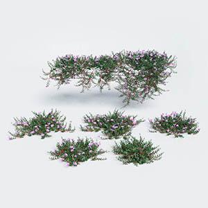 爬藤植物3D模型-1003T24